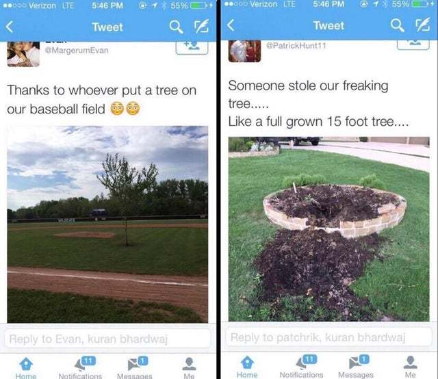 Thanks to whoever put a tree on our baseball field - meme