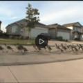 le ducks