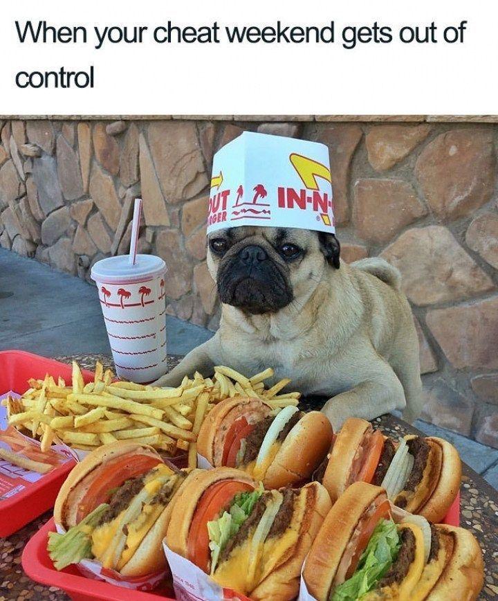 Chef doggo - meme