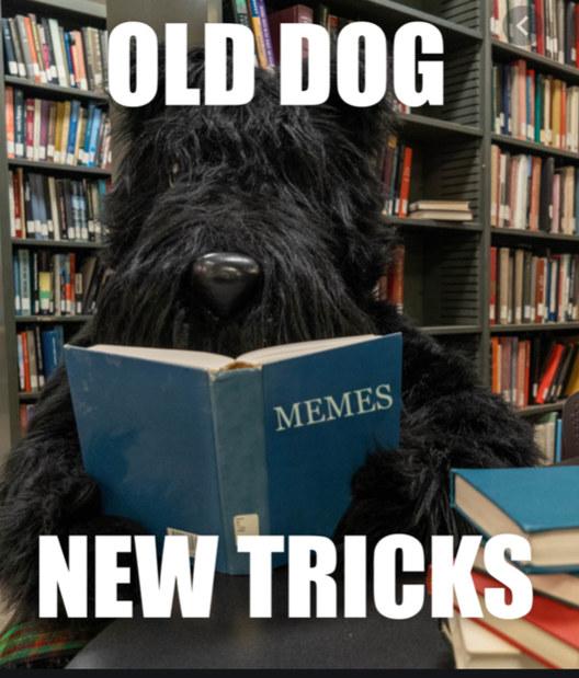 I name him Mr.Memmus Doggus - meme