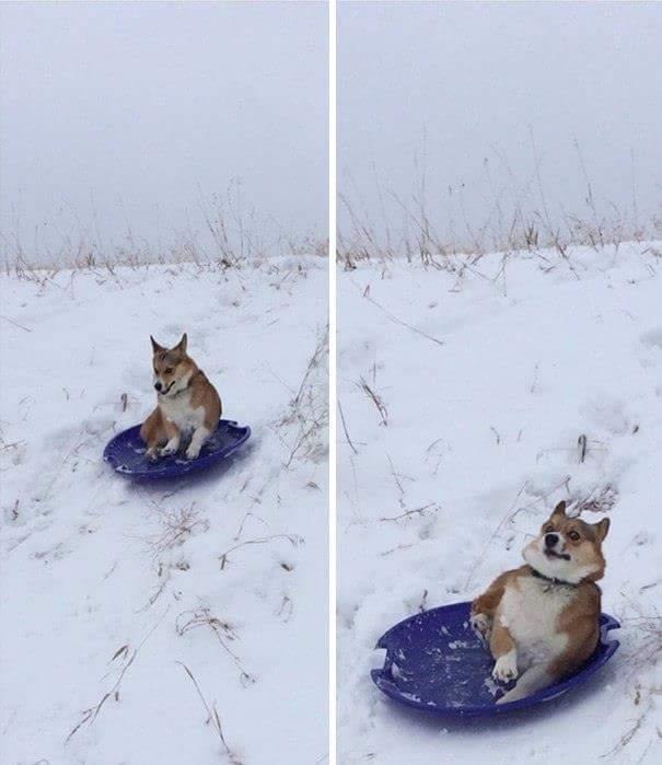 Doggo slide - meme