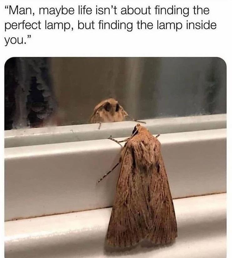 moth self reflection - meme