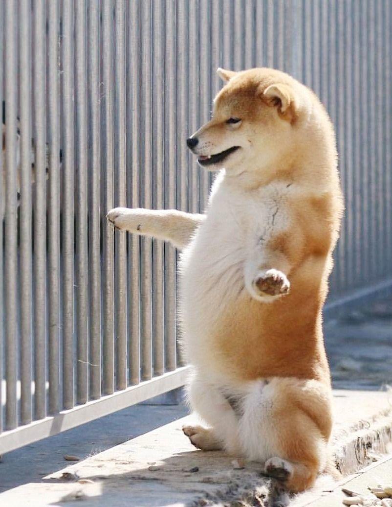Has sido visitado por el perro de la suerte - meme