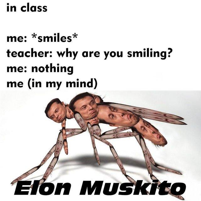 Elon Muskito - meme