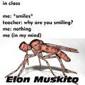 Elon Muskito