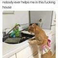 Viens faire la vaisselle !