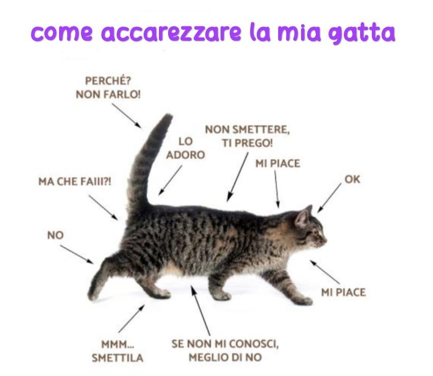 Queste sono le istruzioni che mi ha dato la gatta - meme