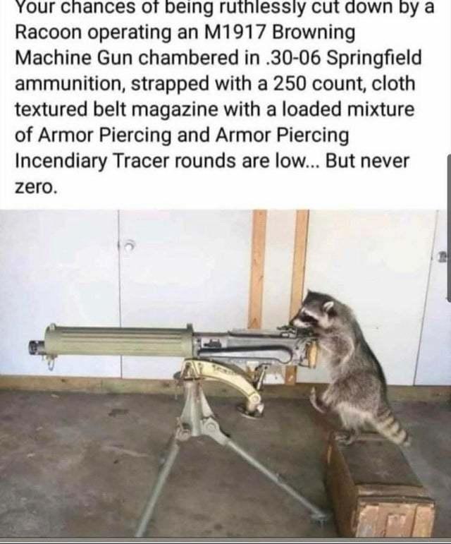 Rocket racoon - meme