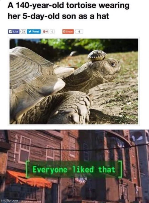 """Momma turtle: """"This is some high end fashion right here."""" - meme"""