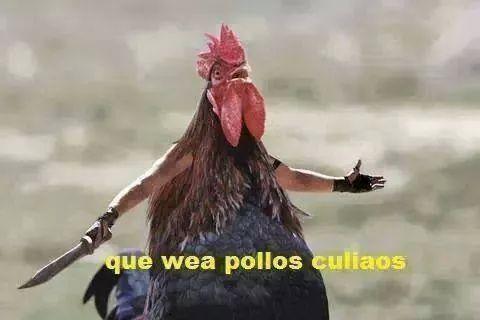 pollos - meme