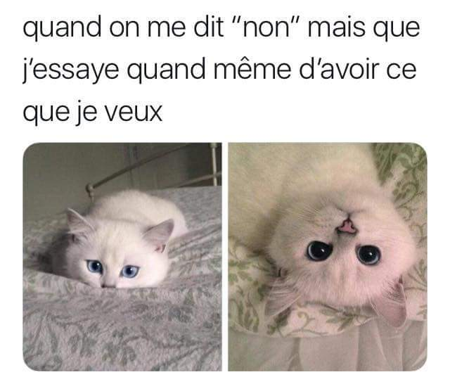 JE LE VEUX ! - meme
