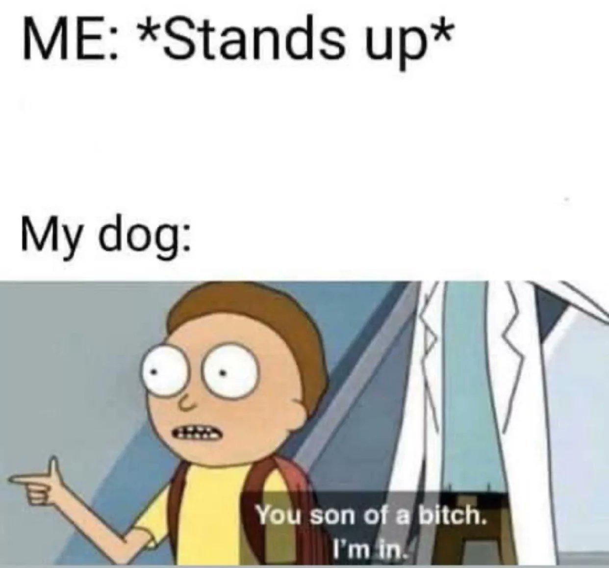 My doggo - meme