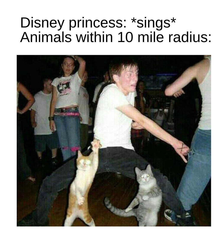 bruh that cat tho - meme