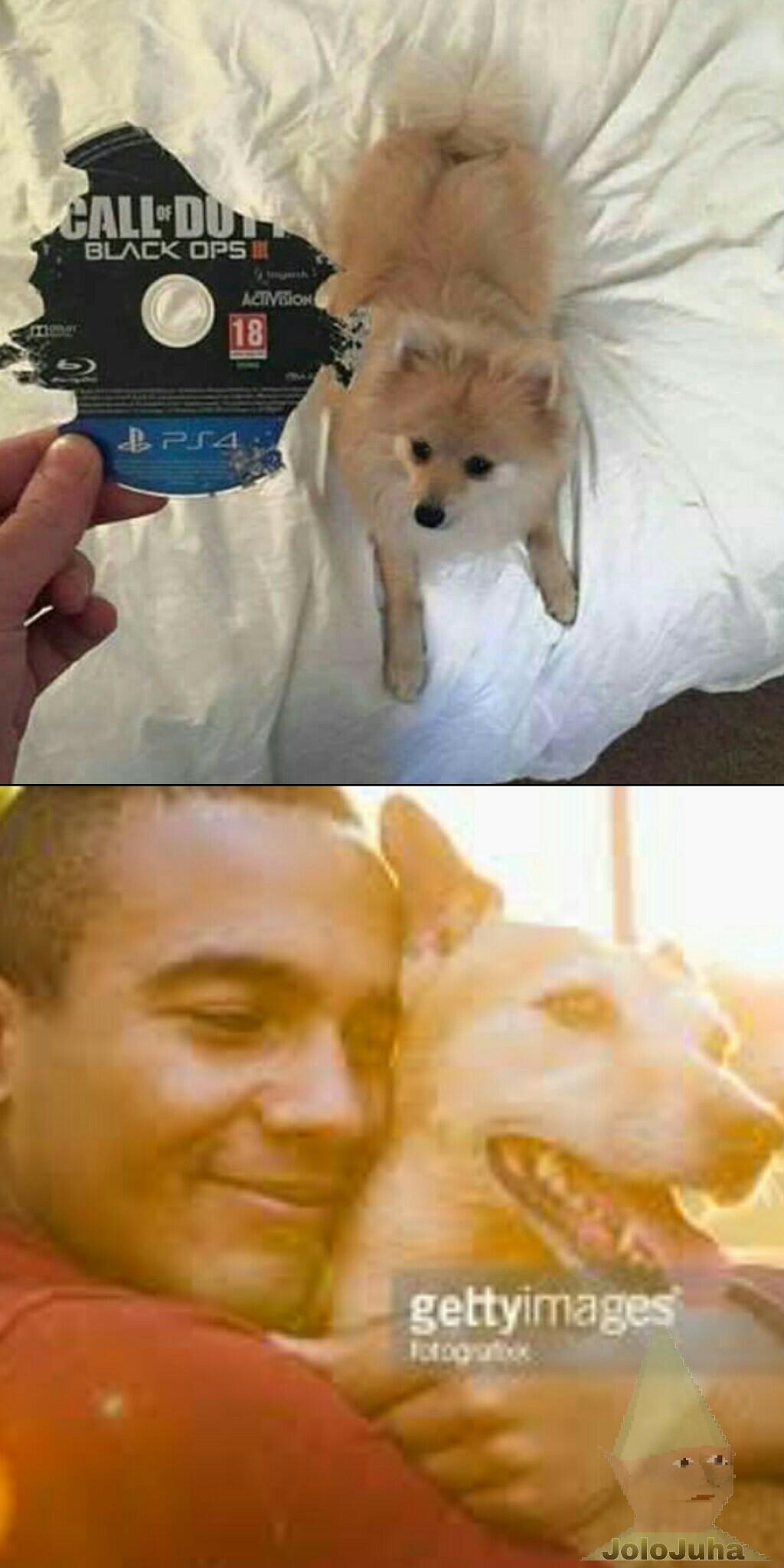 Thanks doggo - meme