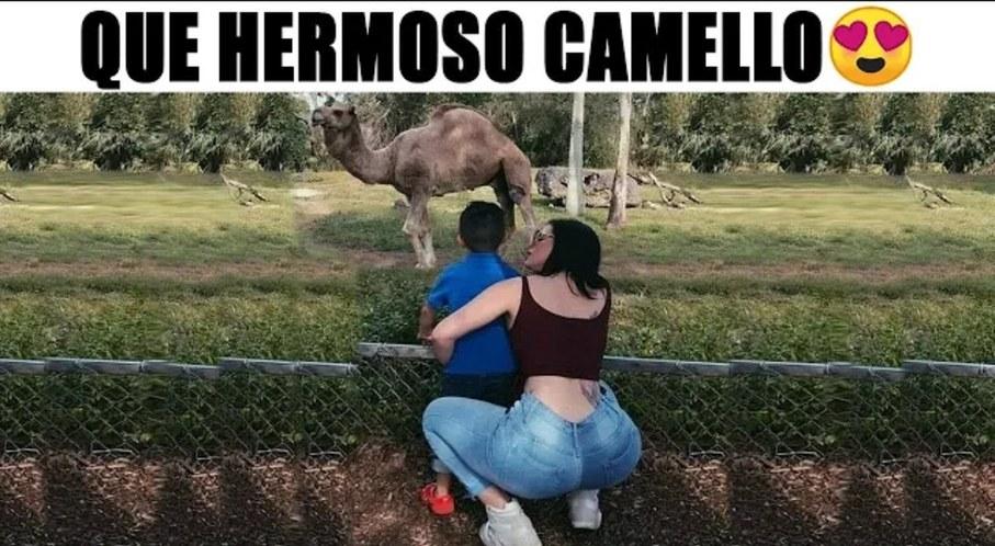 Si no miraron al camello primero me deben un dólar - meme