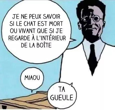 Chat de Schrödinger #physique quantique - meme