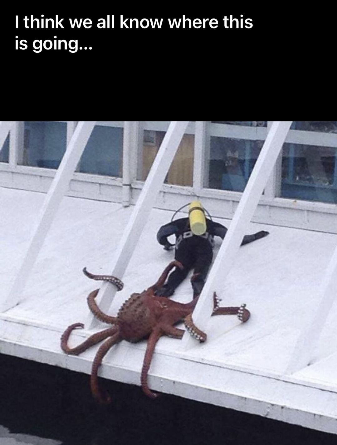 Squidy-chan noooooo - meme