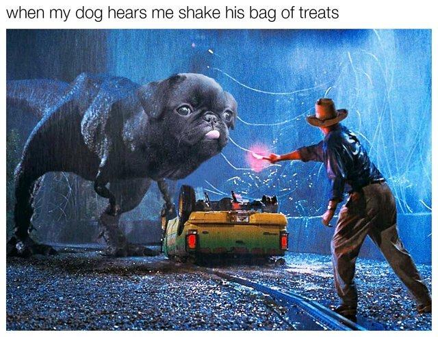When my dog hears me shake his bag of treats - meme