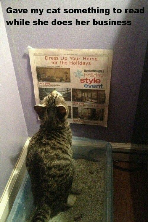 Cat gets something to read - meme