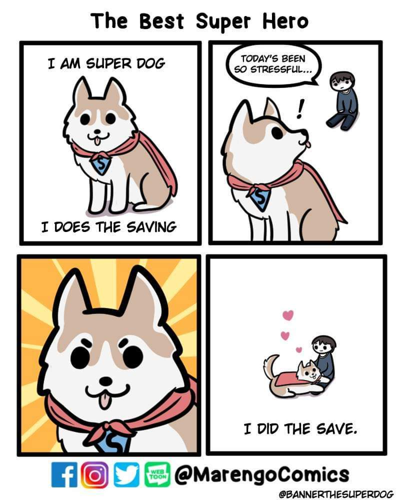 The best job for a dog - meme