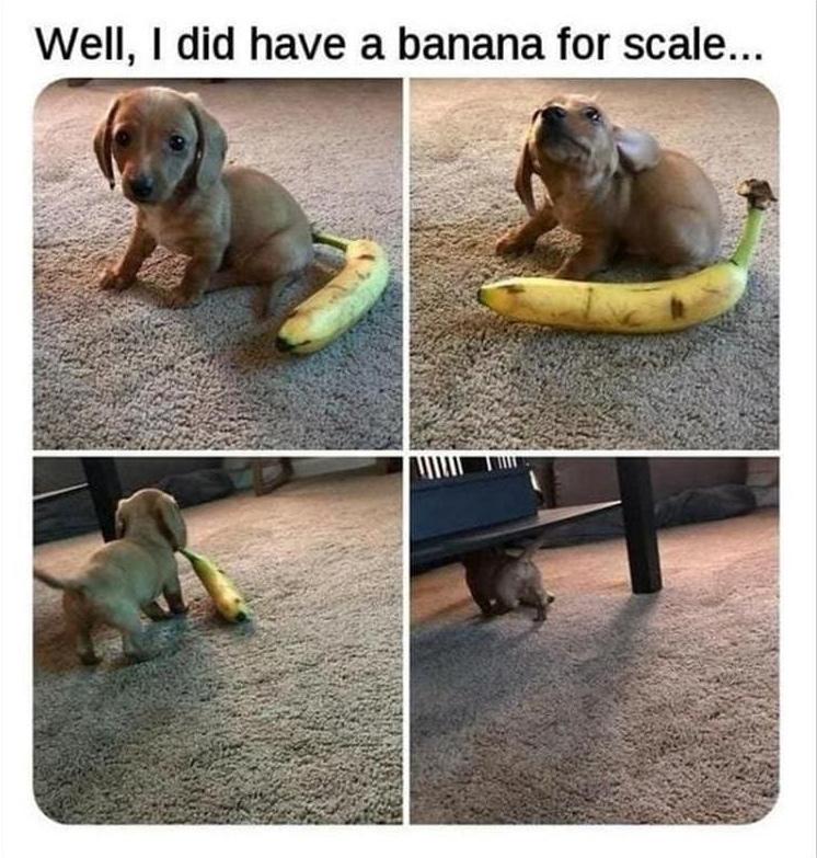 banana for scale stolen - meme