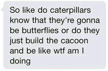 Caterpillars - meme