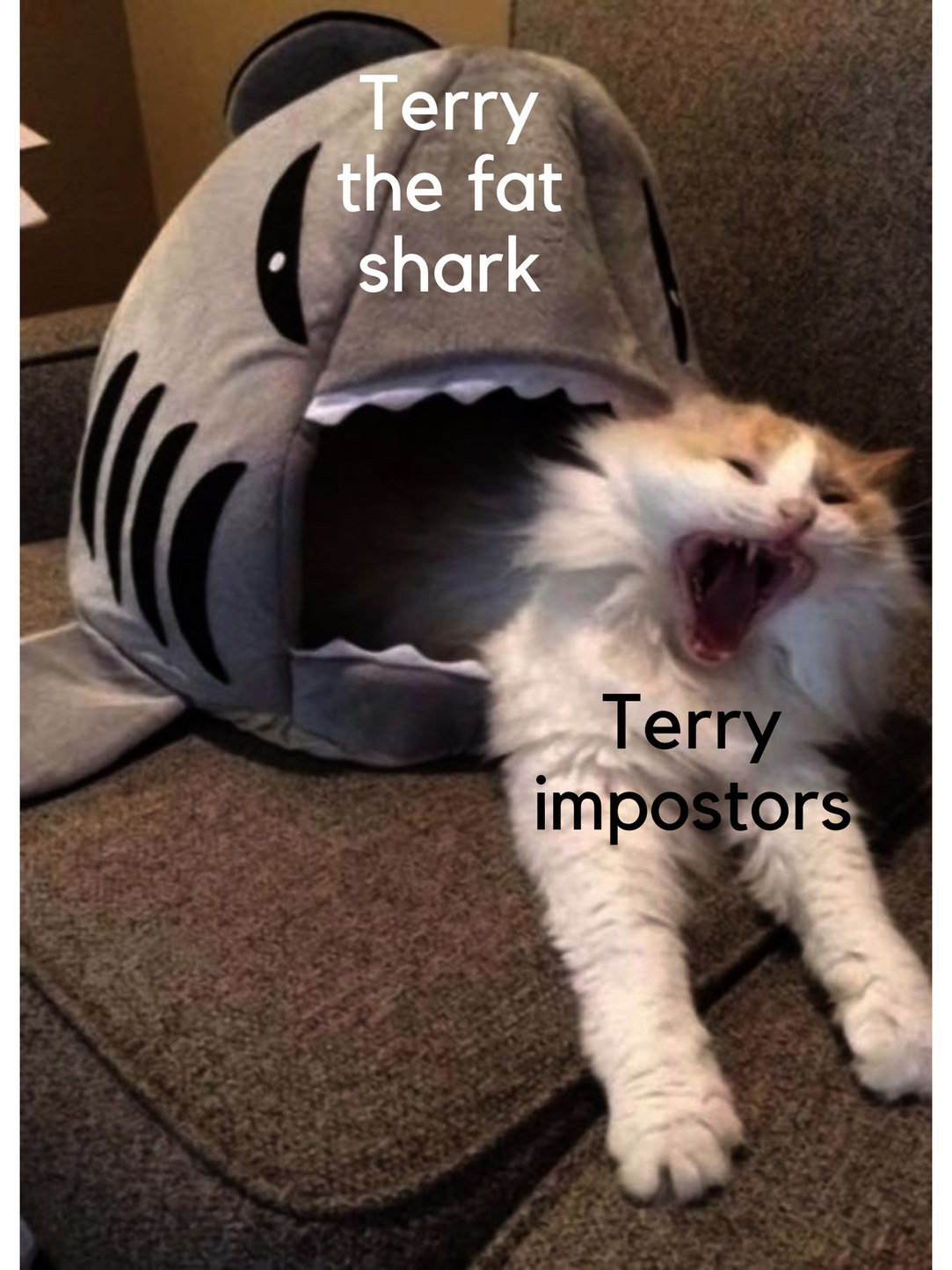 Be weary, there are fake Terry sharks, and they only want death - meme