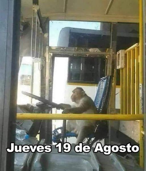 Mexicano microbusero (robado) - meme