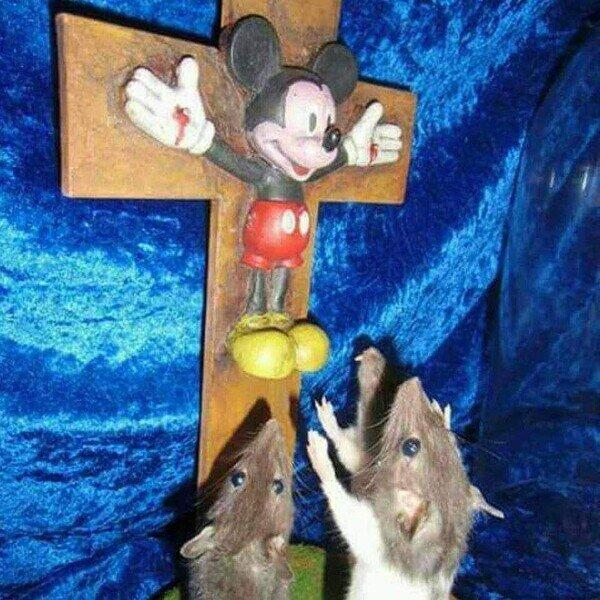 Los Ratones Tambien Tienen A Sus Dioses - meme
