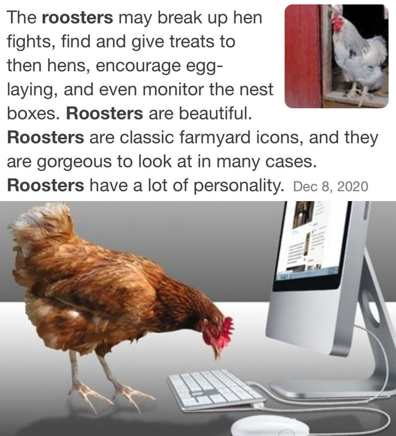 I know that's a chicken, I couldn't find any images of roosters on a keyboard - meme