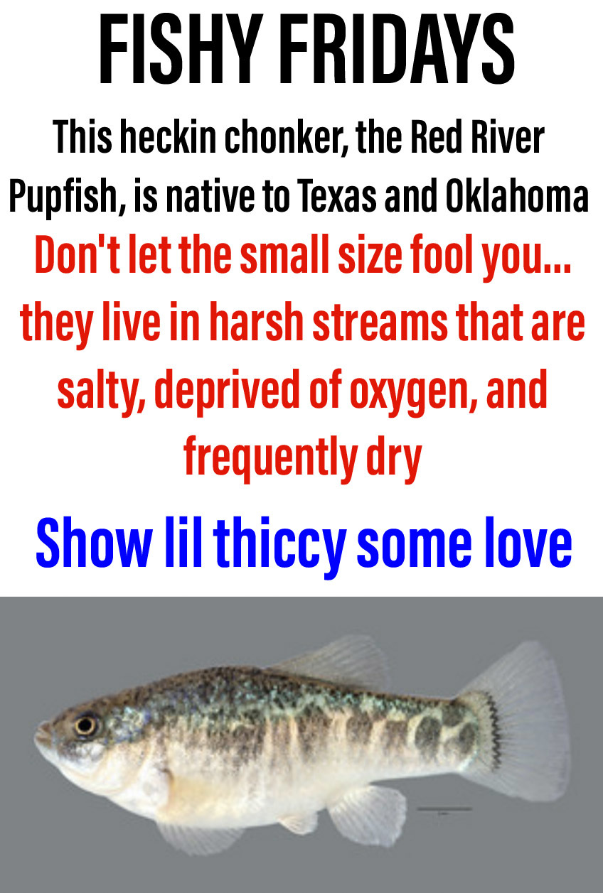 Fishy friday - meme