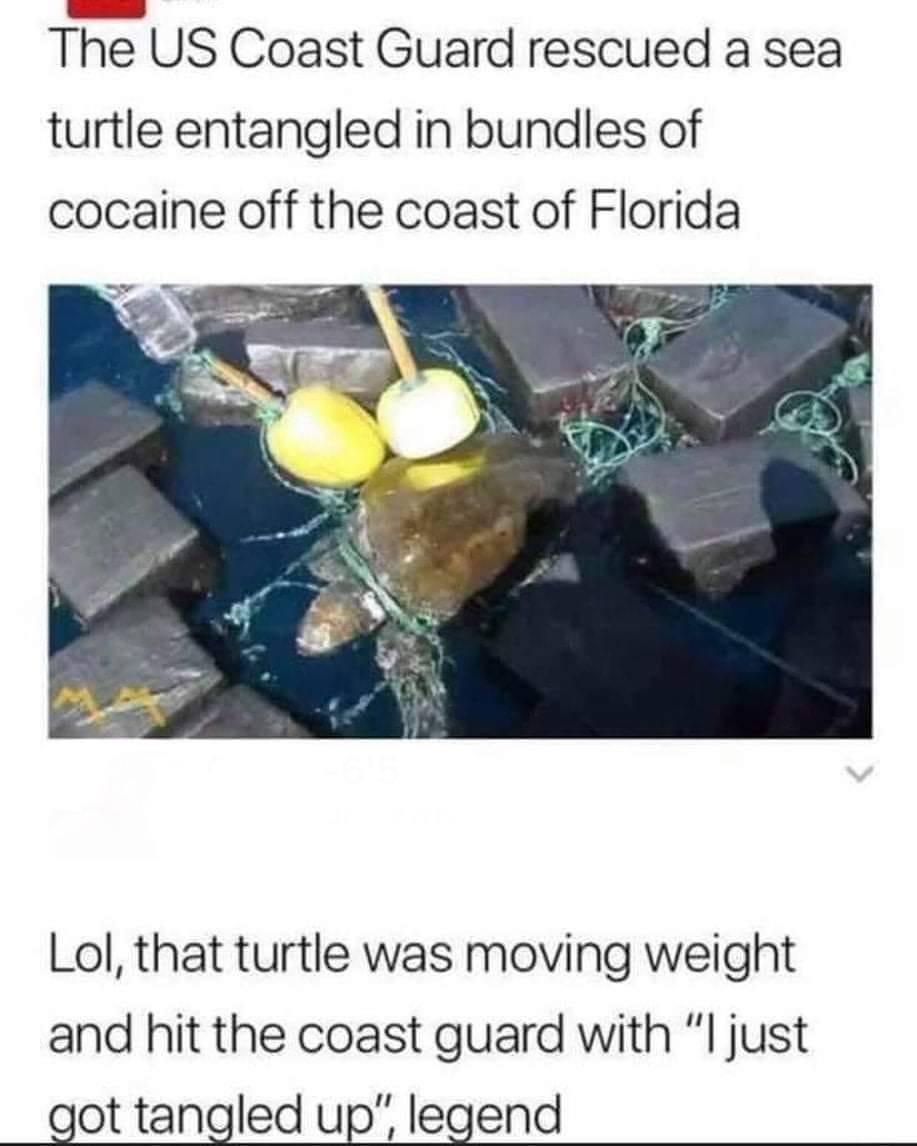 The turtle is a mule - meme
