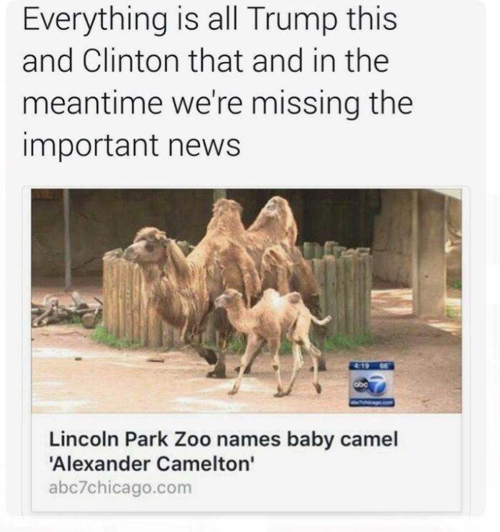 Camelton - meme