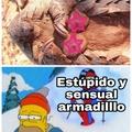 Armadilllo
