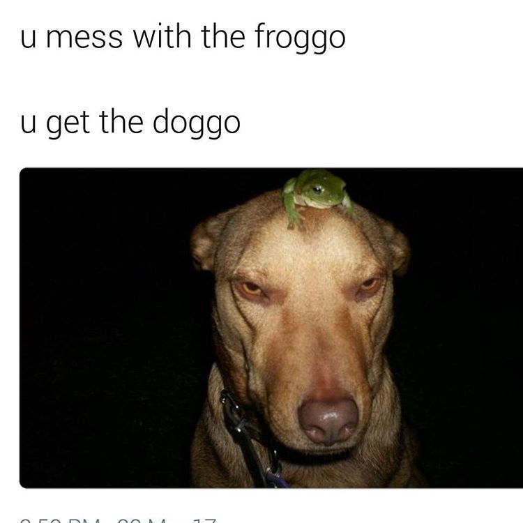 froggo - meme