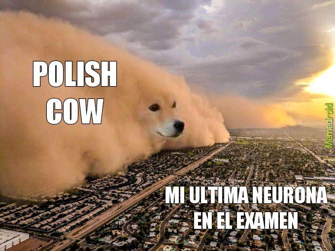 polish cow esta muerto y lo se - meme