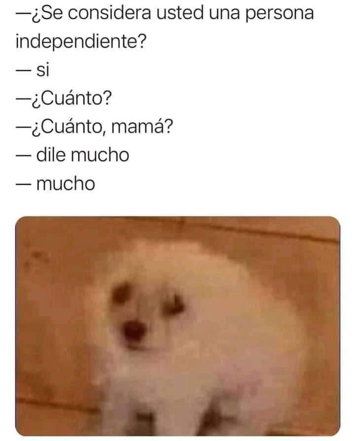 Mucho - meme