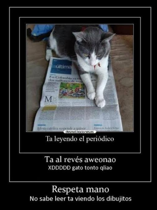 Repeta al gatito ctmr - meme