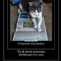 Repeta al gatito ctmr