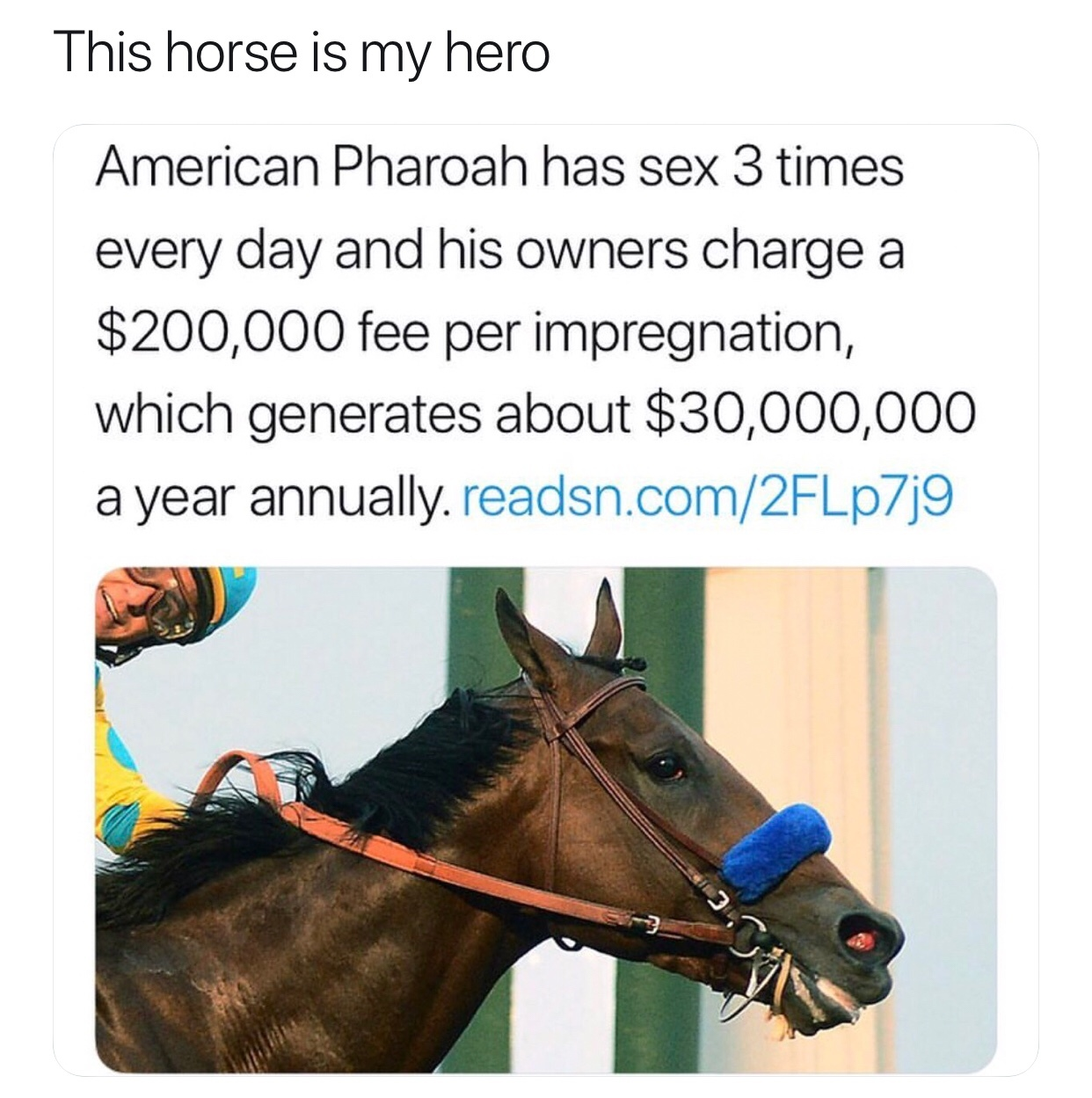 we should all strive to be this horse - meme