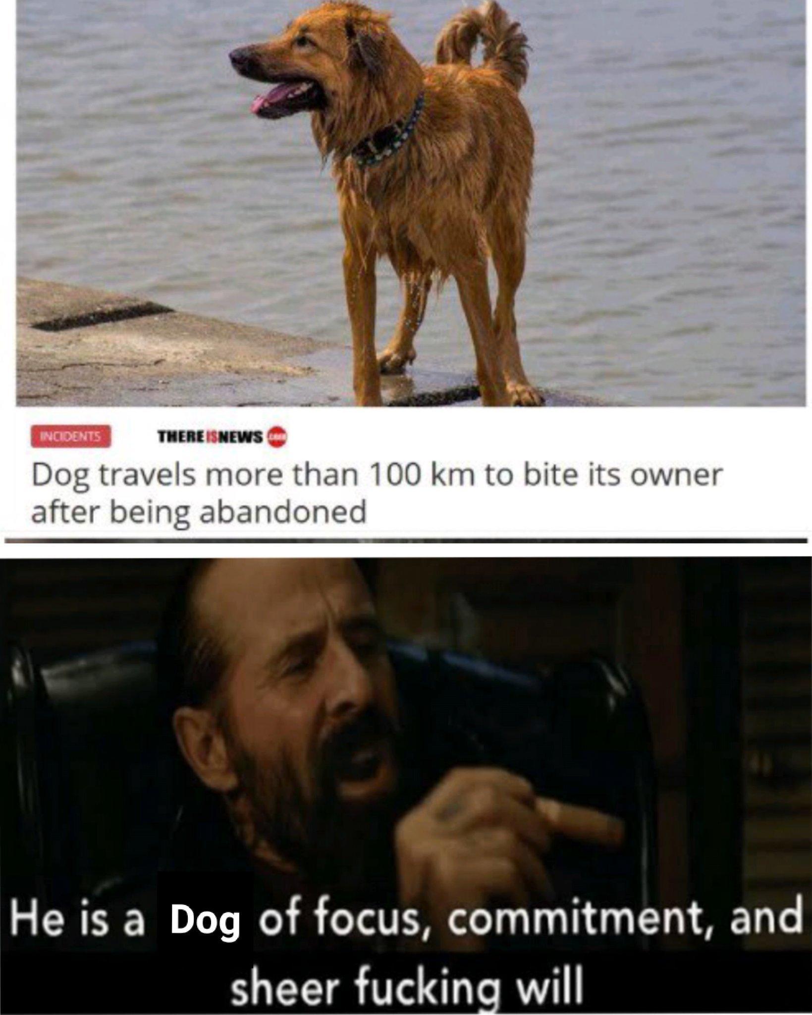 Doggo wick... - meme