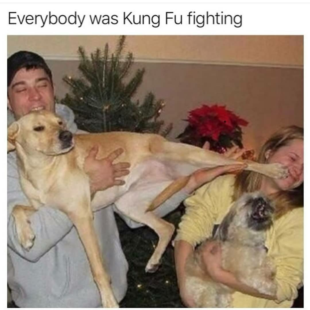Kung foo dog - meme