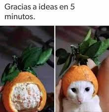 Pobre gato - meme