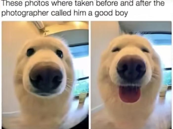 Yes good boy - meme