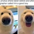 Yes good boy