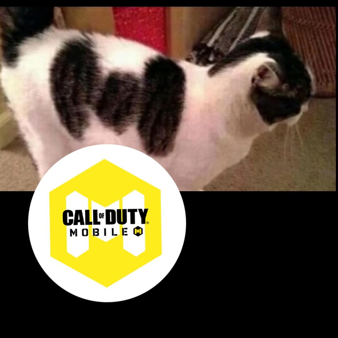 Gato CoD Mobile - meme