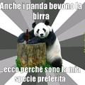 Panda alcolizzati