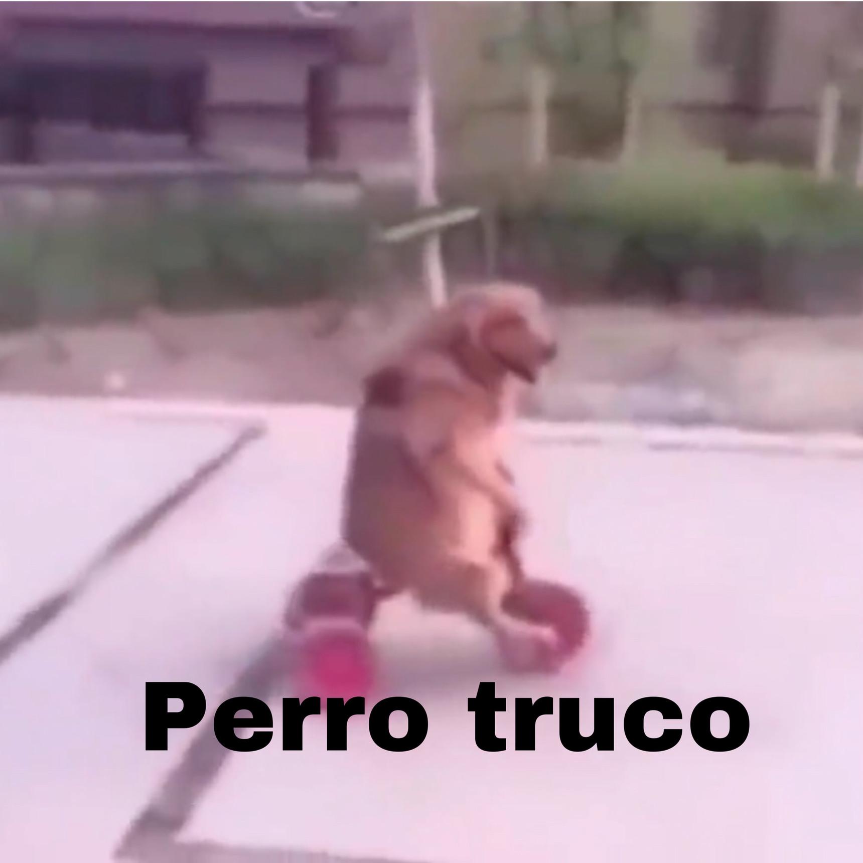 Perro truco - meme