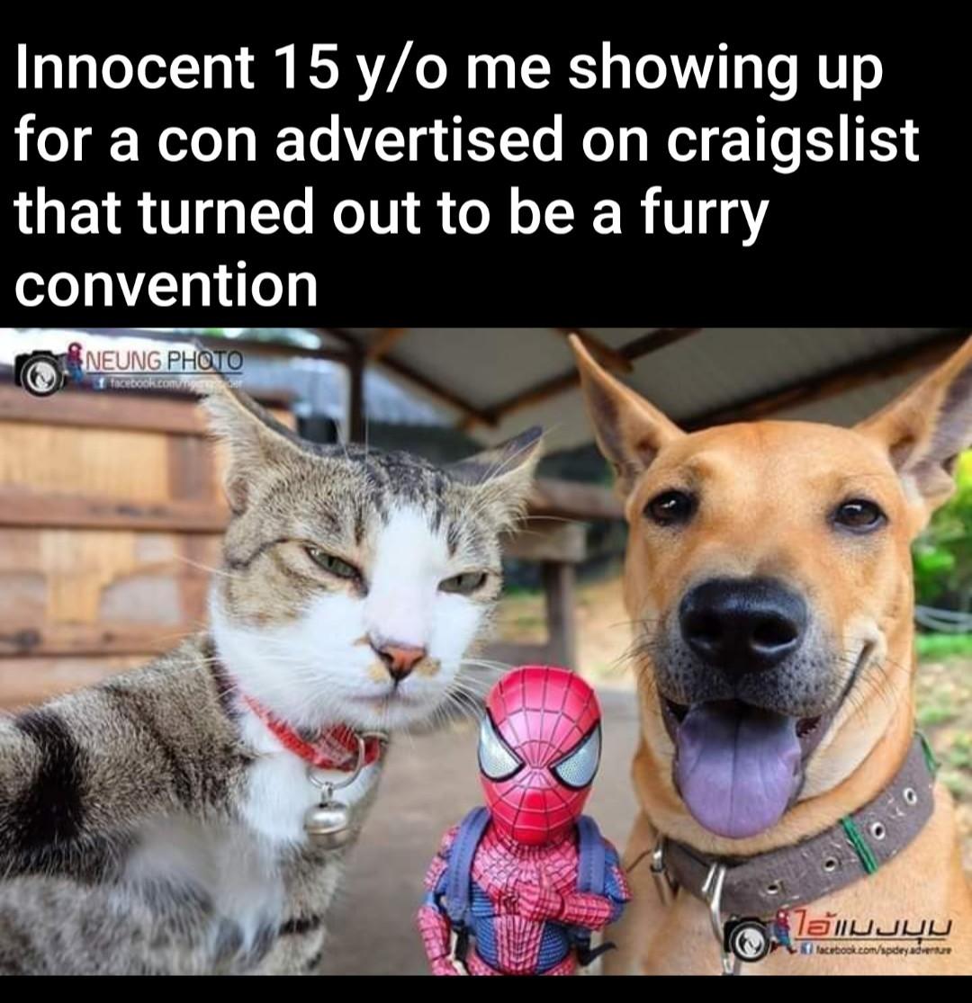 Cat photo shoot - meme