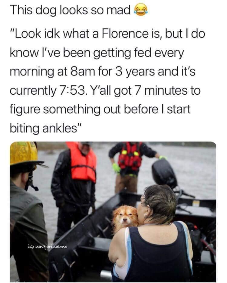 Florence be damned!! - meme